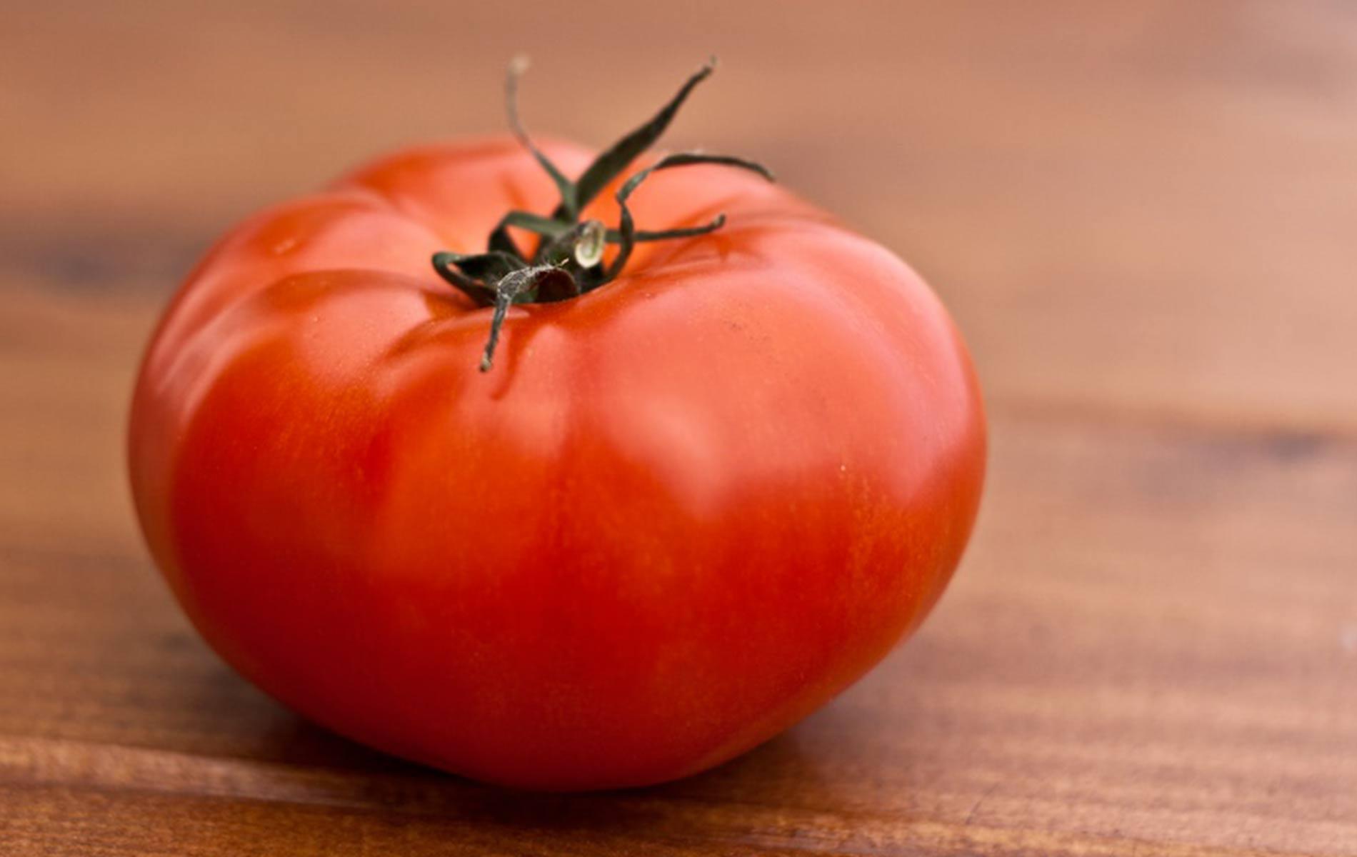 pomodoro-castellano-storia